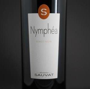 Pinot Puy de Dome Sauvat 1